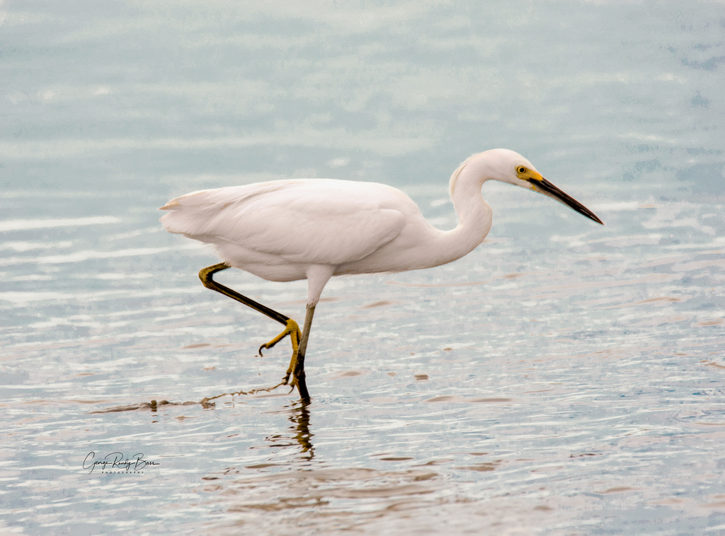 White Egret on Zekes Island Reserve